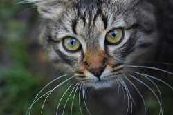Мой первый котик